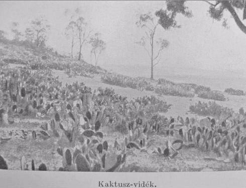 Kaktusz-vidék.