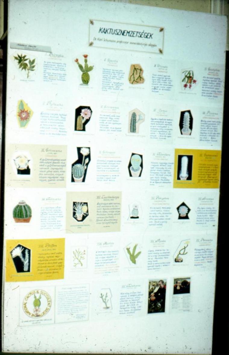 A tábla címe; A kaktusznemzetségeket ismertető tábla Karl Schumann professzor   nomenklatúrája alapján. (fm)
