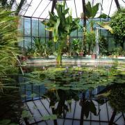 A trópusi üvegház.