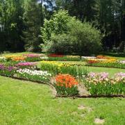 Részletek a tulipán gyűjteményből.